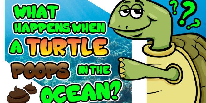 turtle-poops