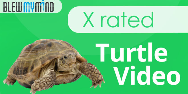 x-rated-turtle